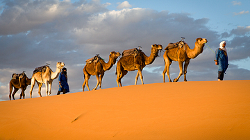 The Camel Caravans of the Ancient Sahara