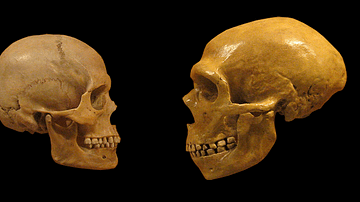 The Neanderthal-Sapiens Connection