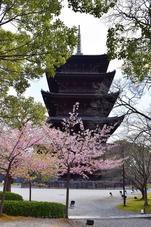 Kyoto's Five-Story Pagoda at Toji Temple